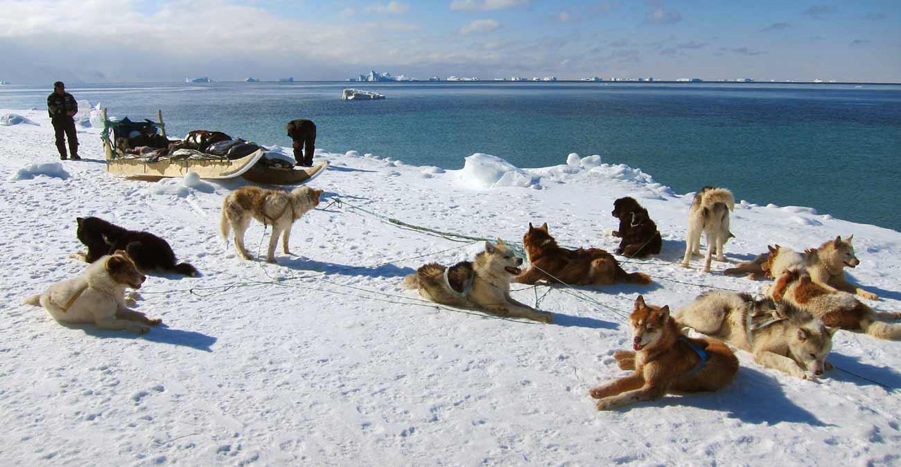 thule dog sledding expedition
