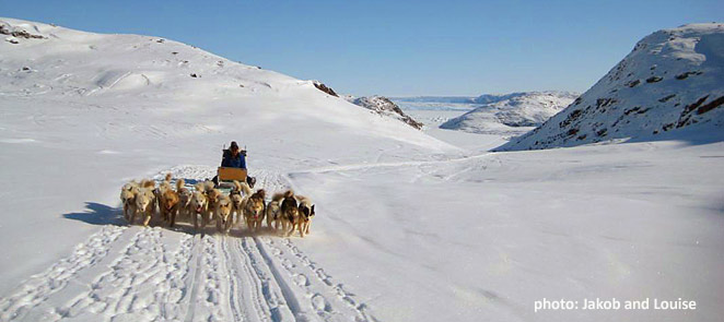 Visit Greenland in winter, dogsled tour in Ilulissat